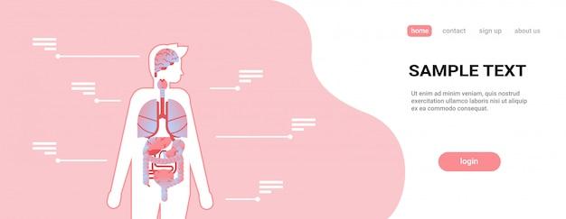 Hauptorgane des menschlichen körpers innerhalb der anatomie Premium Vektoren