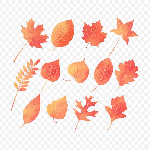 Herbstblätter mit aquarelleffekt Premium Vektoren