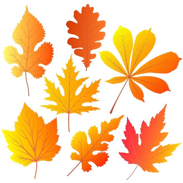 Herbstblätter von kastanien, eichen, johannisbeeren, maulbeeren, ahorn. Premium Vektoren