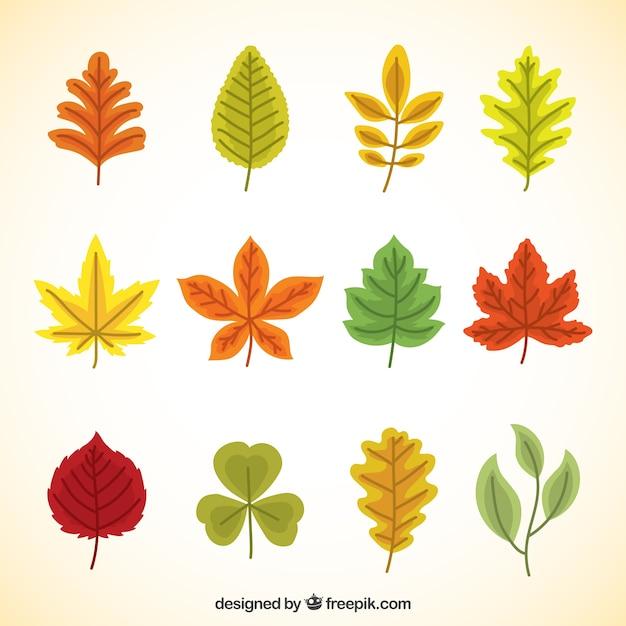 Herbstblätter in verschiedenen Farben gemalt   Download der ...
