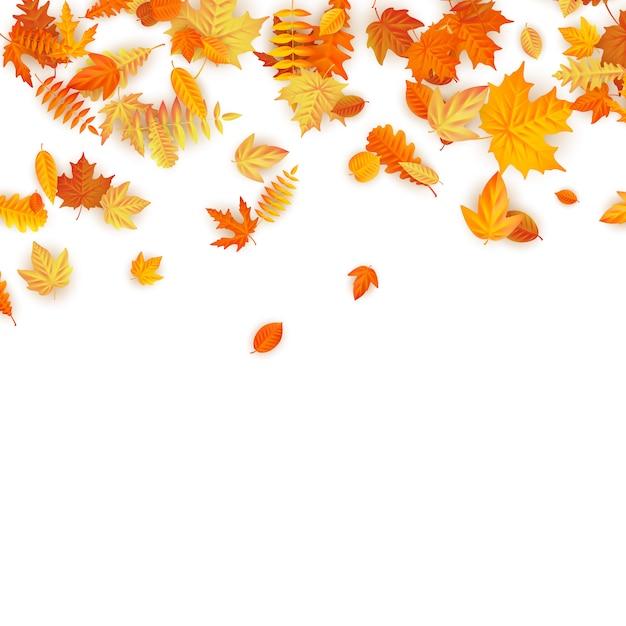 Herbsthintergrund mit goldenem ahorn, eiche und anderen blättern. Premium Vektoren