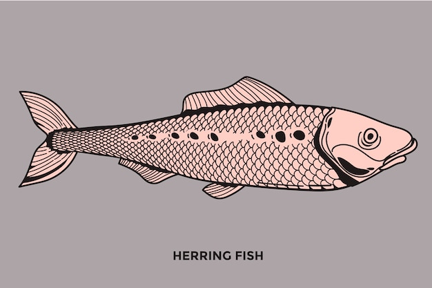 Heringsfisch-illustration mit optimiertem strich Premium Vektoren