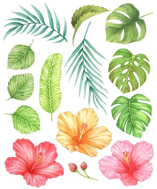 Hibiskus und tropische blätter aquarell Premium Vektoren