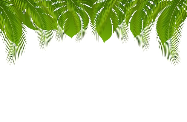 Hintergrund mit exotischer tropischer sommergrenze mit palmblättern und dschungelblatt Premium Vektoren