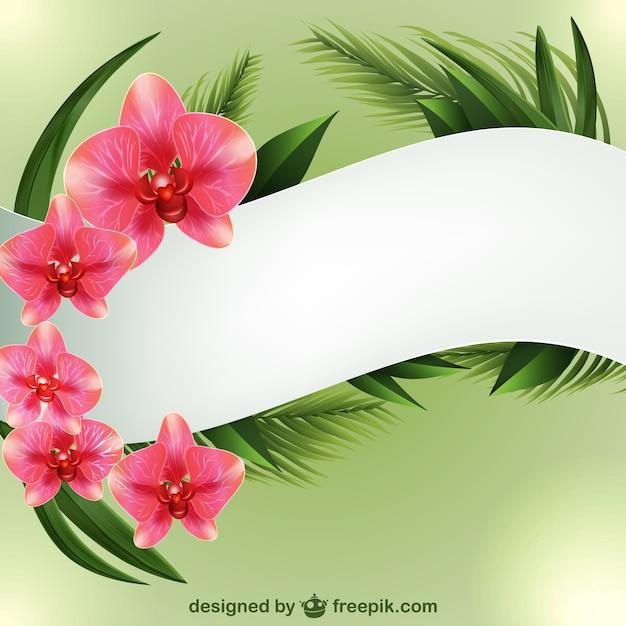 Hintergrund-Vorlage mit Orchideen | Download der kostenlosen Vektor