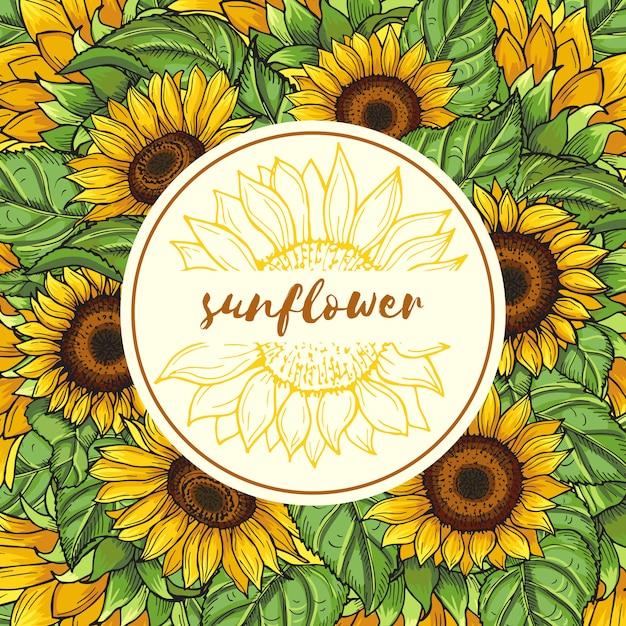 Hintergrundabbildung mit sonnenblumen und platz für ihren text Premium Vektoren