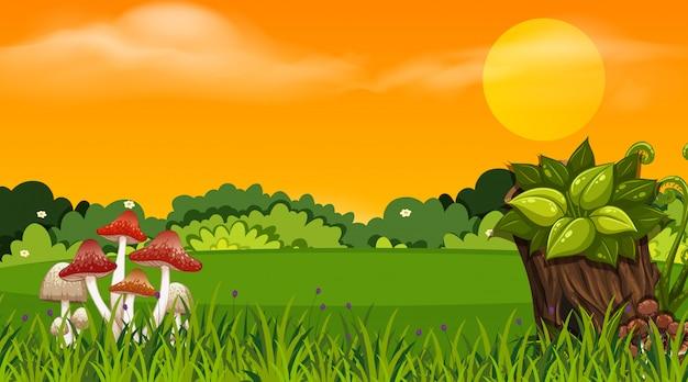Hintergrunddesign der landschaft mit park bei sonnenuntergang Premium Vektoren