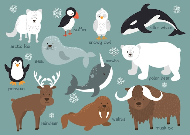 Hintergrundset der arktischen tiere Premium Vektoren