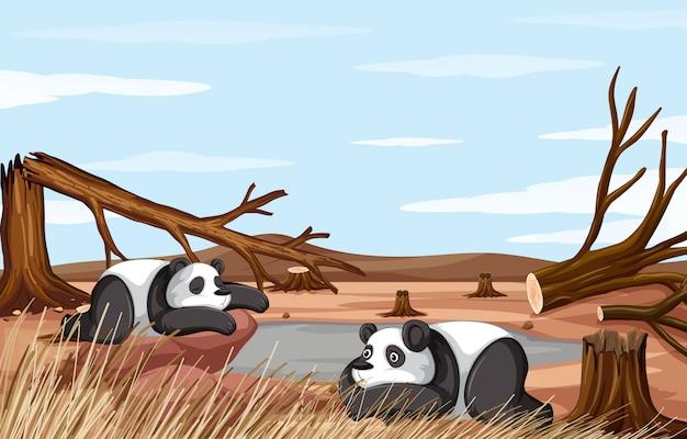 Hintergrundszene mit dem sterben von zwei pandas Kostenlosen Vektoren