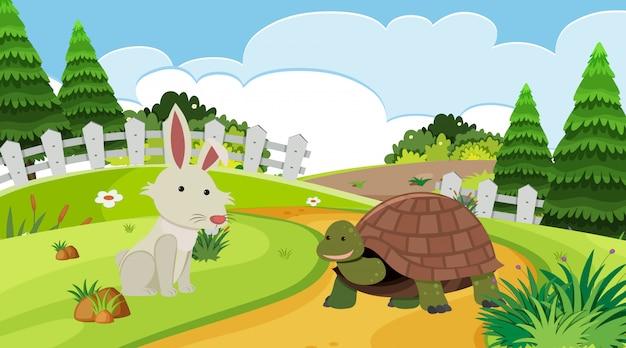 Hintergrundszene mit kaninchen und schildkröte Premium Vektoren