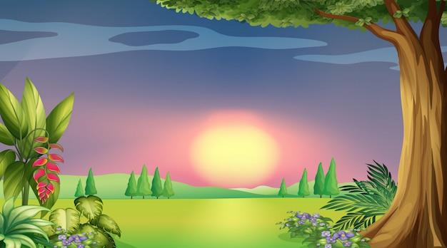 Hintergrundszene mit sonnenuntergang im park Premium Vektoren