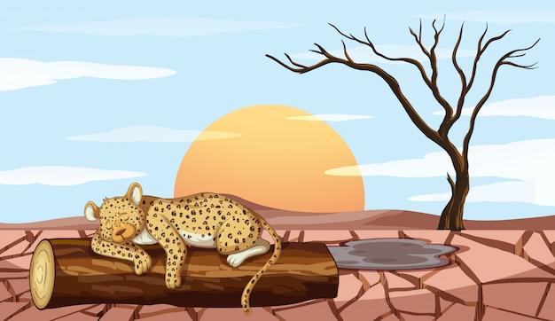 Hintergrundszene mit tiger und dürre Kostenlosen Vektoren