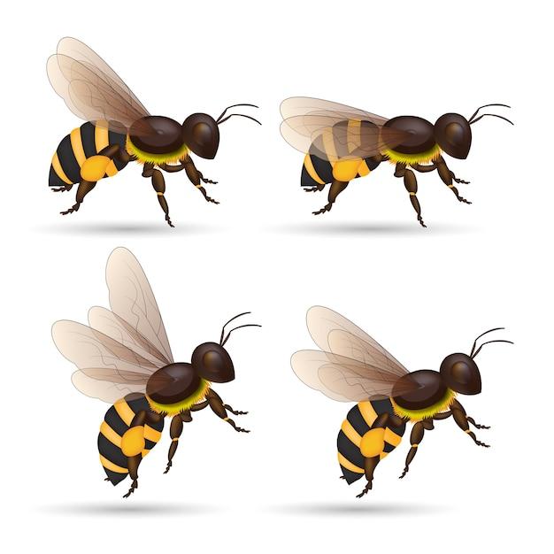 Honigbiene isoliert cartoon-set. tier der honigbiene auf weißem hintergrund. Premium Vektoren