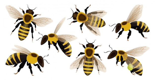 Honigbiene isolierte karikatursatzikone. Premium Vektoren