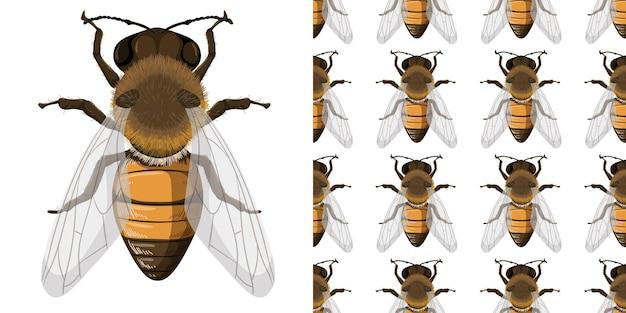 Honigbiene und scheinbarer hintergrund Kostenlosen Vektoren