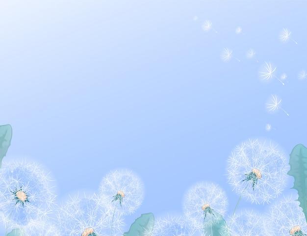 Horizontale rechteckige schablone mit weißem löwenzahn am unteren rand. rahmen für text oder foto mit einem sommerblumenrand auf einem gradientenhintergrund. Premium Vektoren
