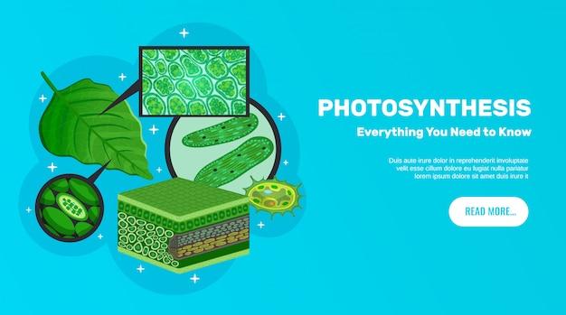 Horizontales fahnendesign der fotosynthese-basisinformationswebsite mit grüner blattzellenchloroplasten-chlorophyllstruktur Kostenlosen Vektoren