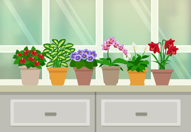 Houseplants hintergrund illustration Kostenlosen Vektoren