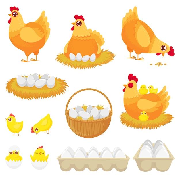 Hühnereien, hühnerfarmei, nest und behälter des hühnereikarikatursatzes Premium Vektoren
