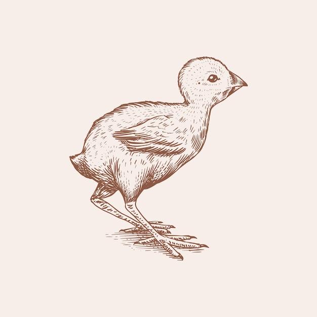 Huhn oder bauernhof kleiner vogel. gravierte handgezeichnete vintage-skizze. holzschnittart. abbildung für menü oder poster. Premium Vektoren
