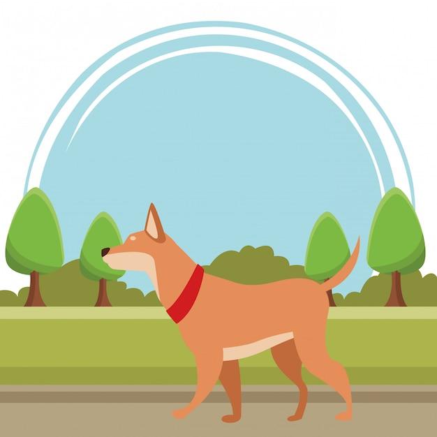 Hund tier haustier Premium Vektoren