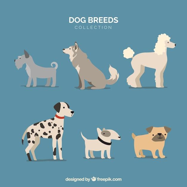 Hunde setzen. sammlung von welpen Kostenlosen Vektoren