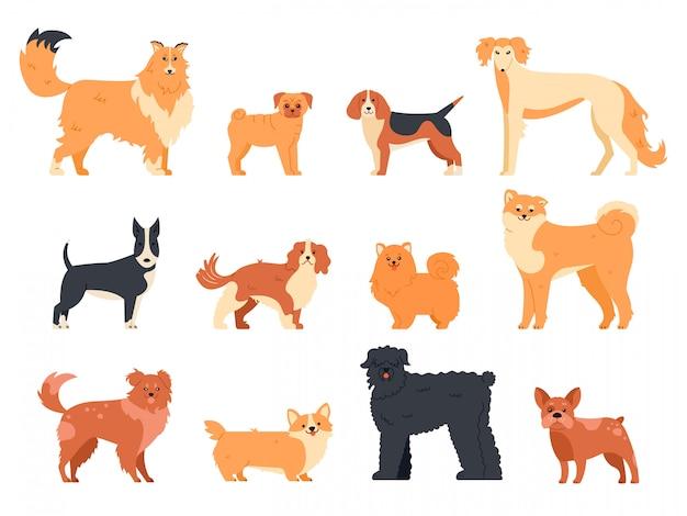Hunde züchten charakter. reinrassiger hund stammbaum, niedlichen welpen mops, beagle, walisischen corgi und bullterrier, lustige haustiere illustration ikonen gesetzt. menschlicher begleiter. cartoon tierpackung Premium Vektoren
