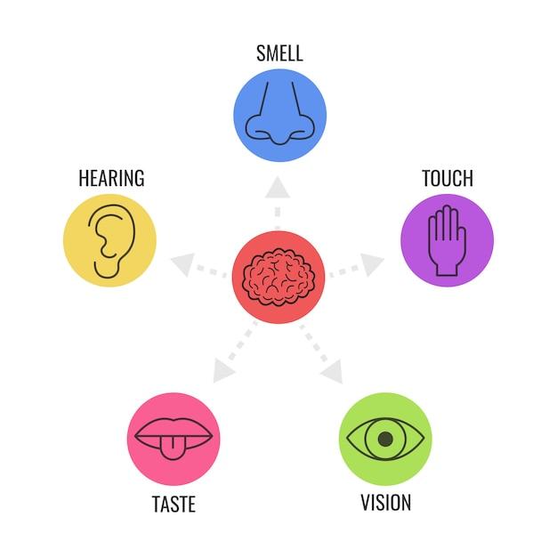 Icon-set von fünf menschlichen sinnen Premium Vektoren