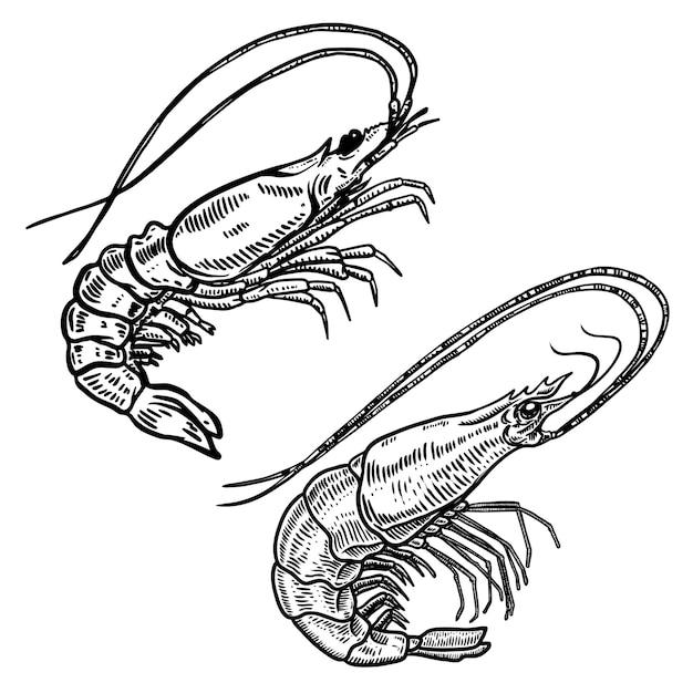 Illustration der garnele im gravurstil. Premium Vektoren