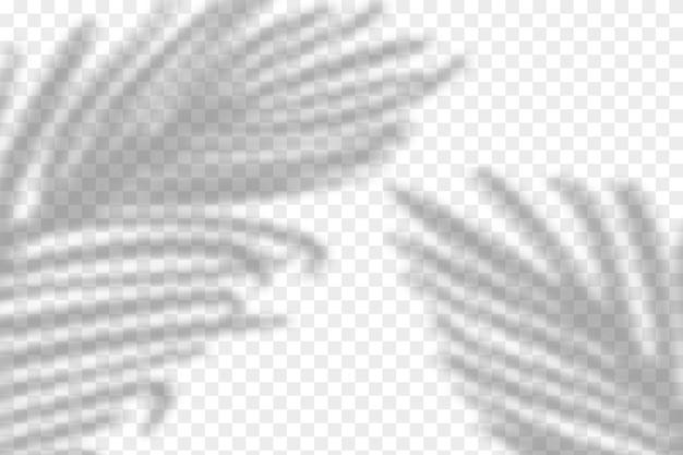 Illustration des realistischen tropischen schattenüberlagerungseffekts. verschwommener transparenter weicher lichtschatten von palmblättern. zeitgenössischer hintergrund für die produktpräsentation. Premium Vektoren