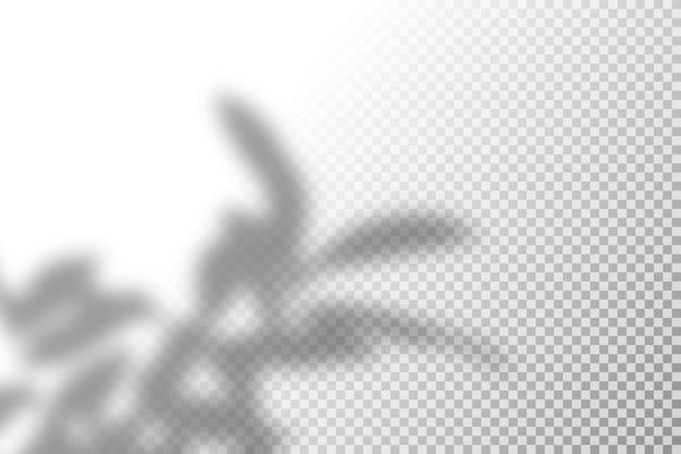 Illustration des realistischen tropischen schattenüberlagerungseffekts. Premium Vektoren