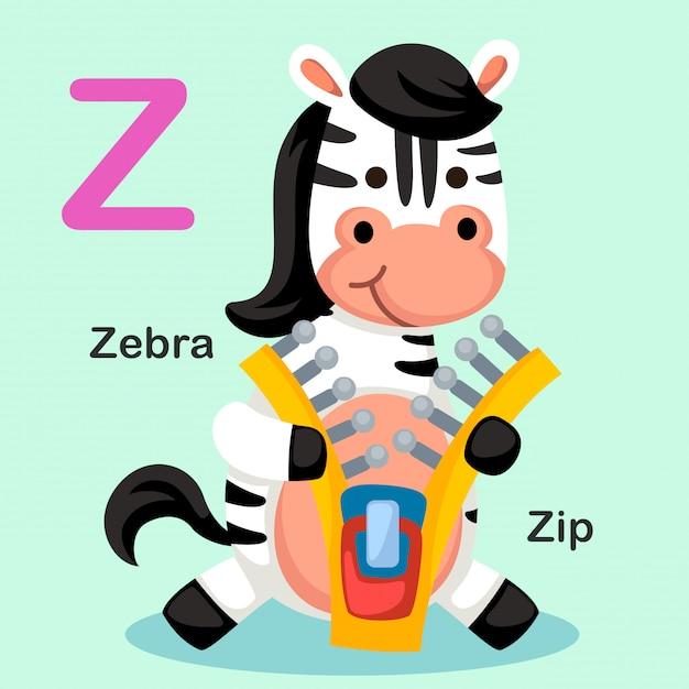 Illustration lokalisierter tieralphabet-buchstabe z-zip, zebra Premium Vektoren