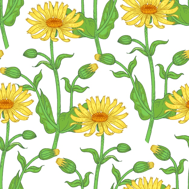 Illustration von arnika. nahtloses muster. blumen von heilpflanzen auf einem weißen hintergrund. Premium Vektoren