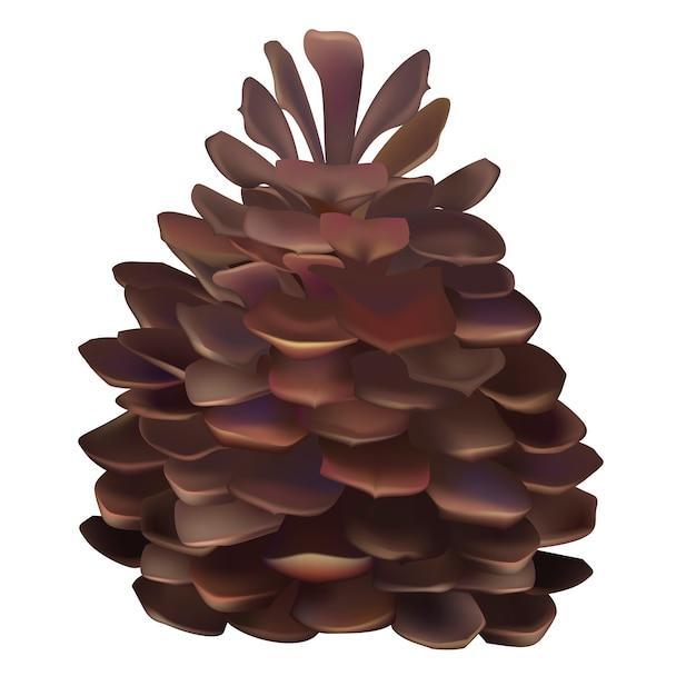 Illustration von pinecone lokalisiert auf weißem hintergrund Kostenlosen Vektoren