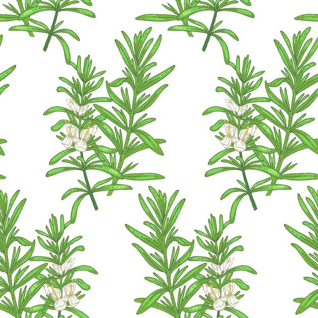 Illustration von rosmarin. nahtloses muster. blumen von heilpflanzen auf einem weißen hintergrund. Premium Vektoren