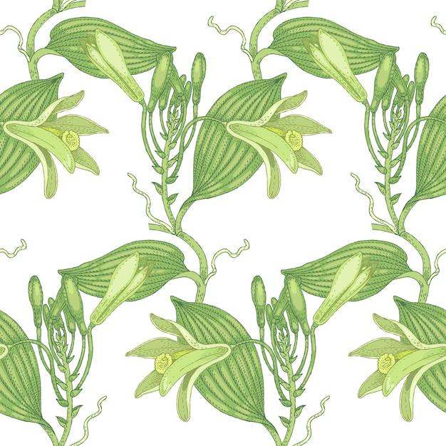 Illustration von vanille. nahtloses muster. blumen von heilpflanzen auf einem weißen hintergrund. Premium Vektoren