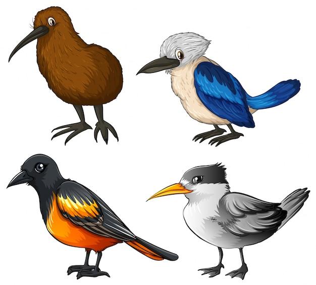 Illustration von vier verschiedenen arten von vögeln Kostenlosen Vektoren