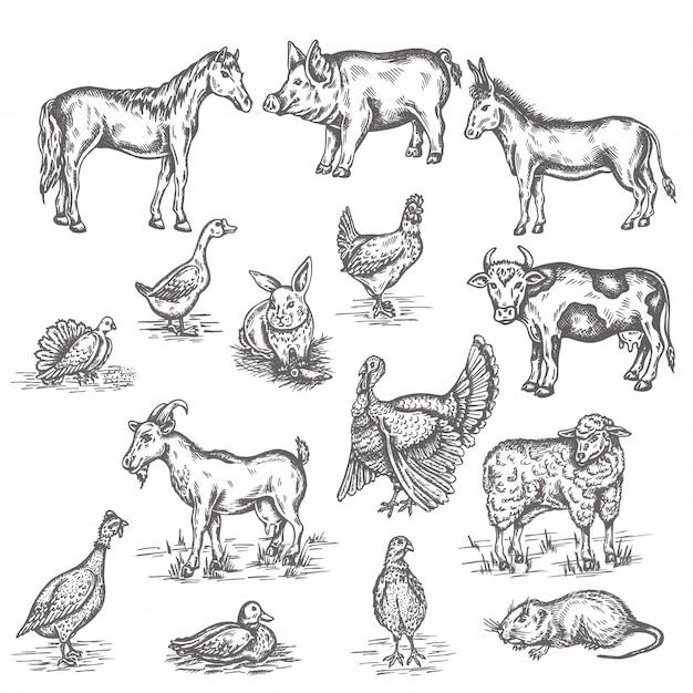 Illustrationssatz für nutztiere Premium Vektoren