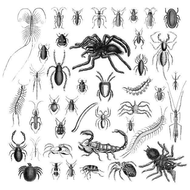 Illustrationssatz verschiedene insekten Kostenlosen Vektoren