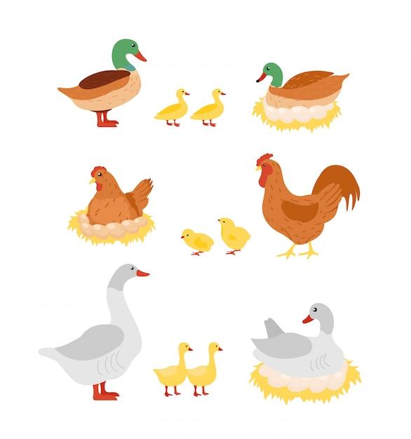 Illustrationssatz von geflügel. henne, hahn, ente und gans, huhn auf eiern auf den nestern im cartoon. Premium Vektoren