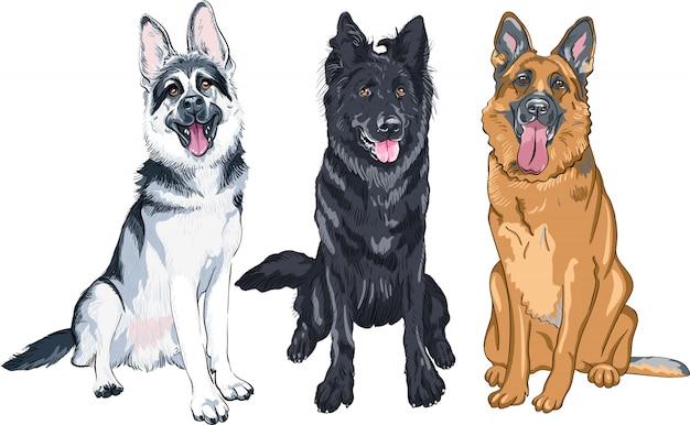 Illustrationssatz von schäferhunden Premium Vektoren