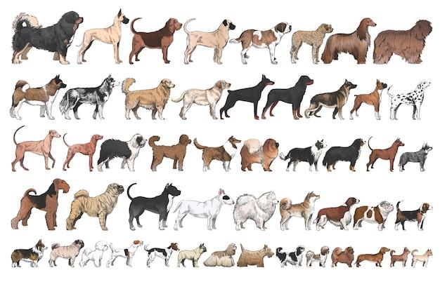 Illustrationszeichnungsart der hunderassesammlung Premium Vektoren