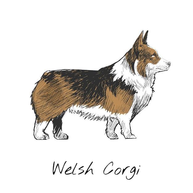 Illustrationszeichnungsart des hundes Kostenlosen Vektoren