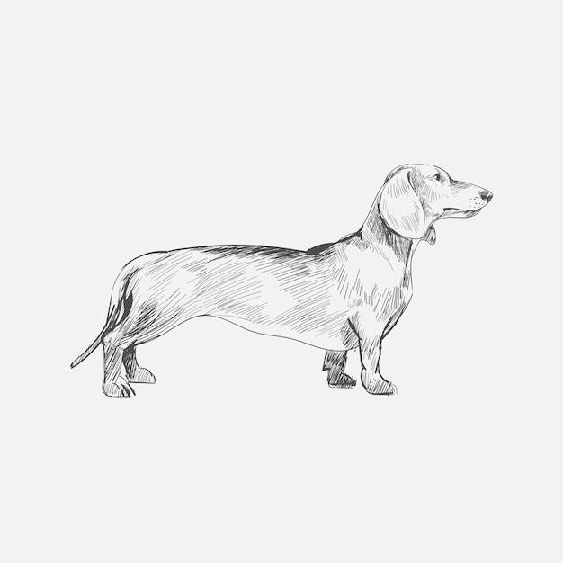 Illustrationszeichnungsart des hundes Premium Vektoren