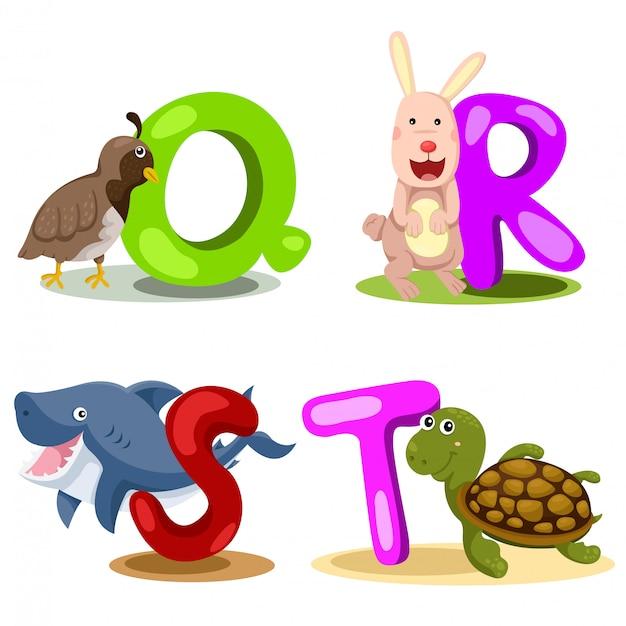 Illustrator alphabet tier buchstabe - q, r, s, t Premium Vektoren