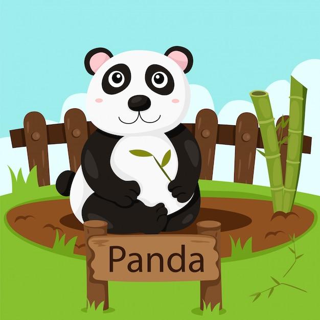 Illustrator von panda im zoo Premium Vektoren