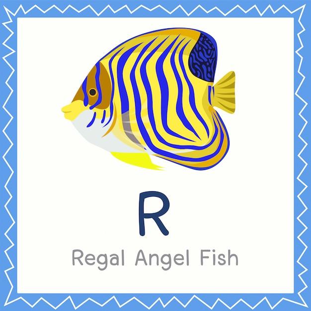Illustrator von r für königliches engels-fischtier Premium Vektoren