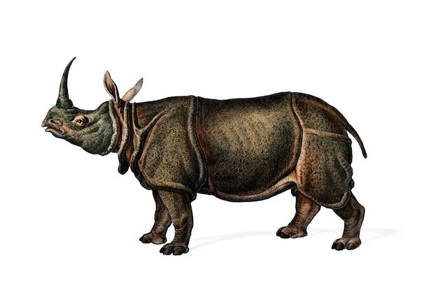 Indisches nashorn (rhinoceros unicornis) Kostenlosen Vektoren