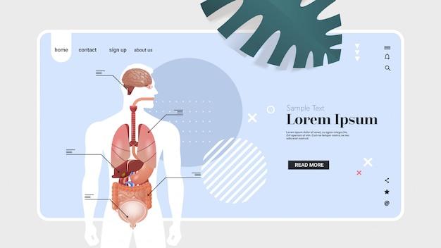 Infografikplakat der menschlichen körperstruktur mit dem horizontalen kopienraum des porträts des anatomiesystems der inneren organe Premium Vektoren