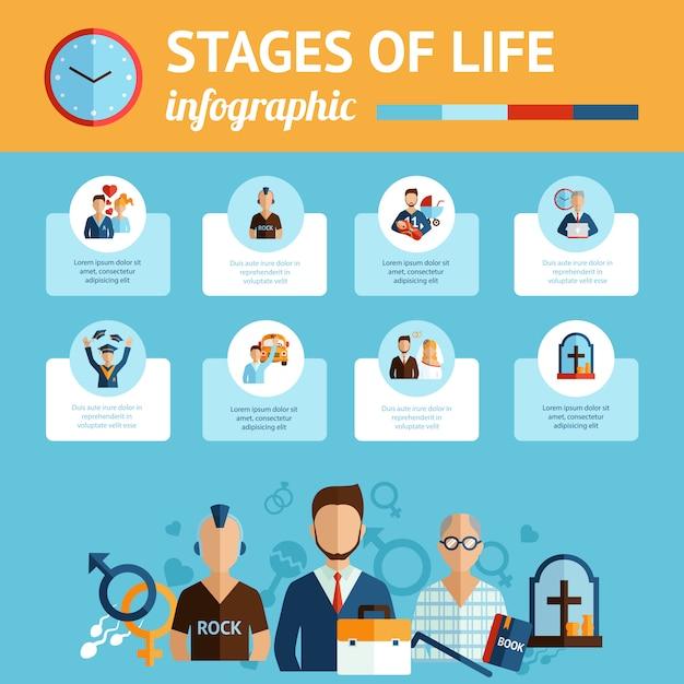 Infographik-bericht des lebensstadiums Kostenlosen Vektoren